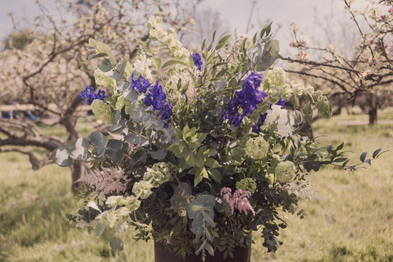 Springtime flowers are radiant