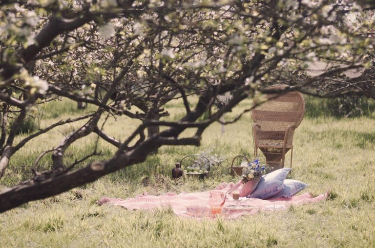 Environmental shot of the picnic blanket in situ at the apple orchard