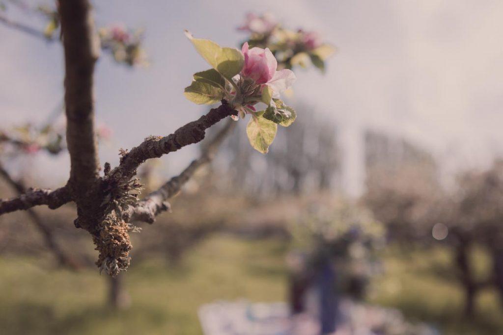 a single blossom flower bathed in golden springtime sunshine